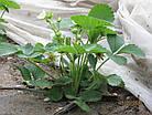 Агриспан 30 белый 6,35*250, фото 5