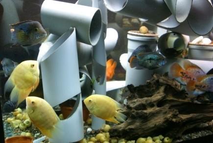 10 правил для тех, кто выбирает аквариум