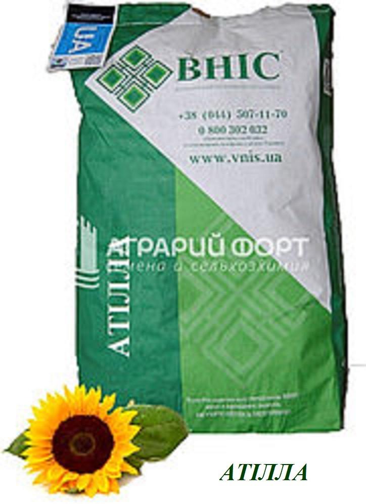 Семена подсолнуха Атилла /ВНИС/ Насіння соняшнику Атілла /ВНІС/