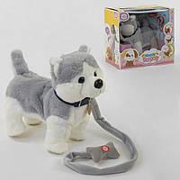 Мягкая интерактивная игрушка собачка Хаски на поводке, ходит, лает, поет