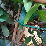 Хомут-стяжка садова 100 шт., фото 2