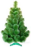 """Сосна """"Новогодняя"""" пушистая высота 1.8метров длина хвои 10см."""