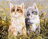 """Картина за номерами 9414 """"Кошенята у травичці"""" 40х50см, набір фарби акрил, кисть -3шт"""