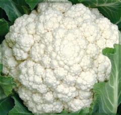 Семена Цветной капусты Фридом F1 (Freedom) 2500 семян Seminis - Агролавка - Интернет-магазин в Одессе