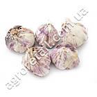 Чеснок севок Гермидор 50/60 0.5 кг, фото 4