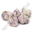 Чеснок севок Гермидор 50/60 0.5 кг, фото 3