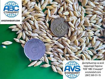 Озимый ячмень Селена Стар Элита. Высокоурожайный ячмень 75ц/га, морозостойкий, для Юга Украины, засуха 8 балов