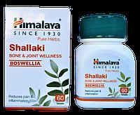 Шалаки, Шаллаки, Shallaki (60cap) при болях в суставах, артрите, остеопорозе, падагре и др., фото 1