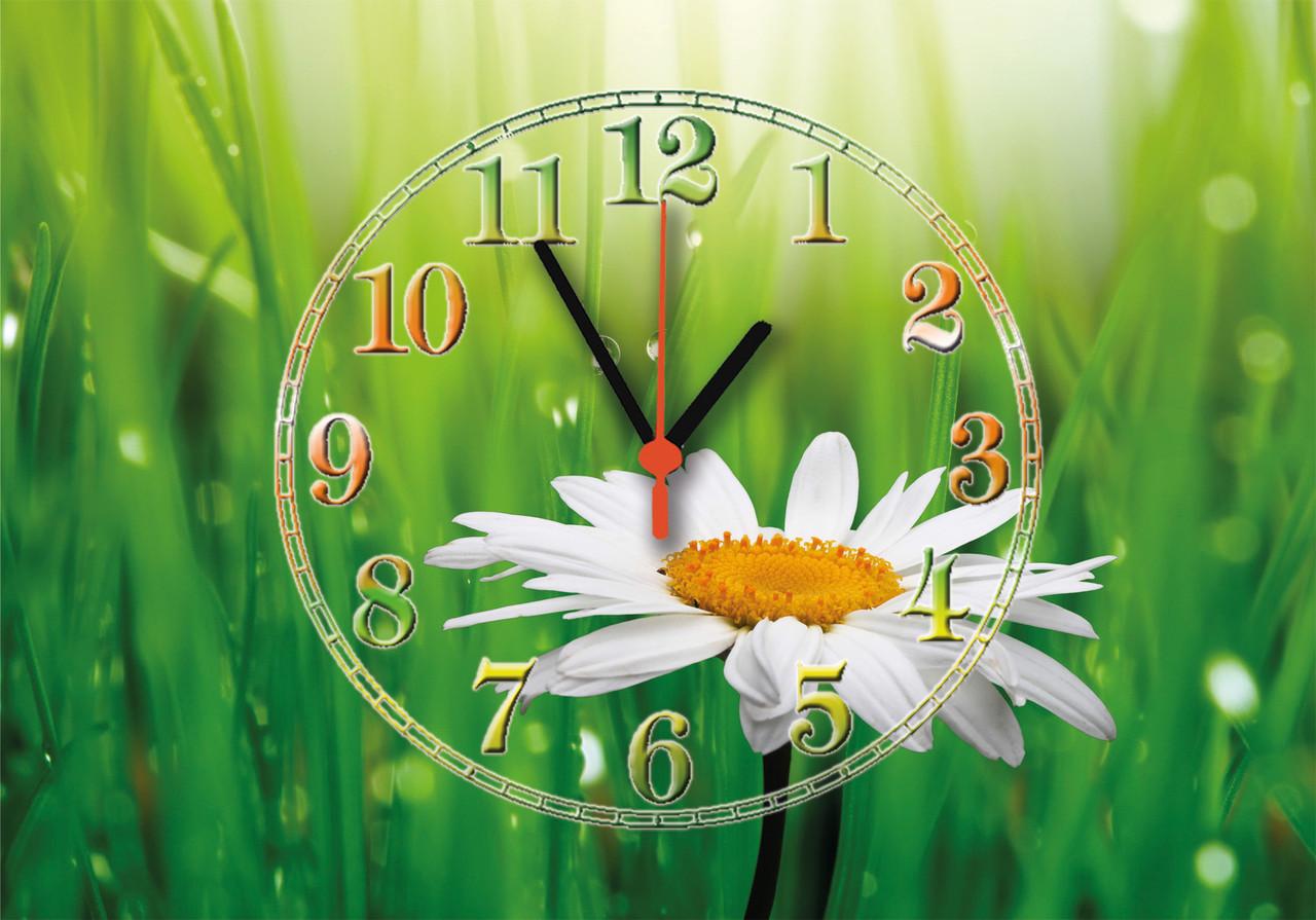 """Часы настенные стеклянные """"Ромашка в природе"""""""