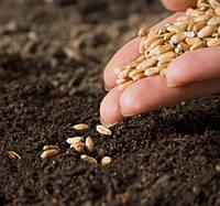В Украине сформировались худшие за 10 лет условия для сева озимых