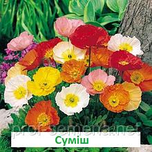 Мак альпійський  Пульчінелла (колір на вибір) 100 шт