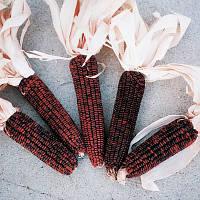 Кукуруза Кровавый палач