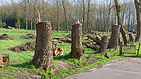 Очистка участка от деревьев. Уборка территории. Демонтаж