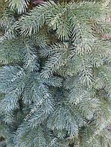 """Литая елка """"Кедр Европейский"""" 2.10м // Лита ялинка / Ель / ёлка / сосна, фото 3"""