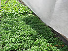 Агриспан 40 белый 6,35*50, фото 7