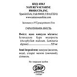 Kelp Бура водорість, Келп, НСП, NSP, США. Джерело органічного йоду, фото 4