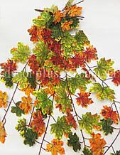 Куст листьев кленовых осенних