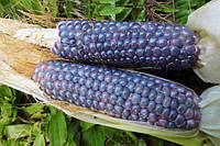 Кукуруза Голубой нефрит, фото 1