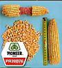 Кукуруза PR39A50/ПР39А50 PR39A61/ПР39А61 P8529/П8529 PR38N86 PR38A79 PR37N01 PR38A22 PR39G83 PR39T13 PR39B76