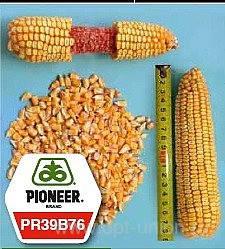 Семена кукурузы Пионер(импорт)PR39A50 PR39A61 P8529 PR38N86 PR38A79 PR37N01 PR38A22 PR, фото 2