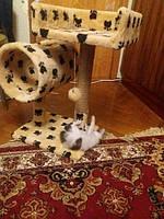 Довольный котик Нюся с миникомплексом Пушистик