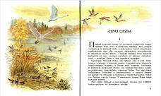 Мамин-Сибиряк  Серая Шейка, фото 3