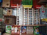 Дерев'яна драбинка для птахів-60 см, фото 3