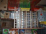 Дерев'яна драбинка для птахів-60 см, фото 4