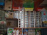 Дерев'яна драбинка для птахів-60 см, фото 5