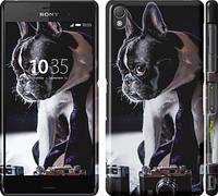 """Чехол на Sony Xperia Z3 D6603 Бульдог-фотограф """"142c-58"""""""