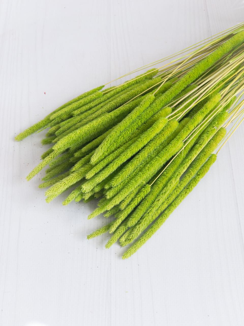 Флум натуральний салатовий