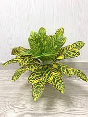 Искусственный куст.Декоративное, комнатное растение-кротон., фото 3