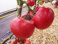 Семена томата Афен F1 / Аfen F1, 1000 семян
