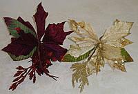 Цветок пуансетии бархатной вишневого цвета
