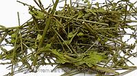 Вербена лекарственная, трава 50 грамм