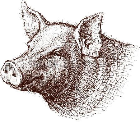 Диагностика инфекций свиней