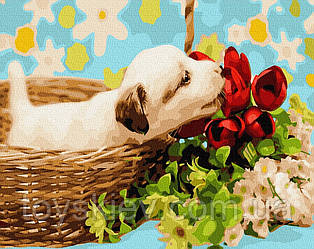 "Картина по номерам BrushMe (Брашми) ""Интересный щенок"" 40х50 см GX27475"