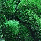 Мох стабилизированный ( ягель). Светло зеленый., фото 10