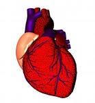 Лечение сердечно-сосудистой системы, почек, сердца.