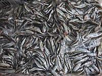 Ферина черноморская розница 1кг вакуум (атерина черноморская), с/м, размер 6-8см