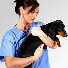 Ветеринария, общее