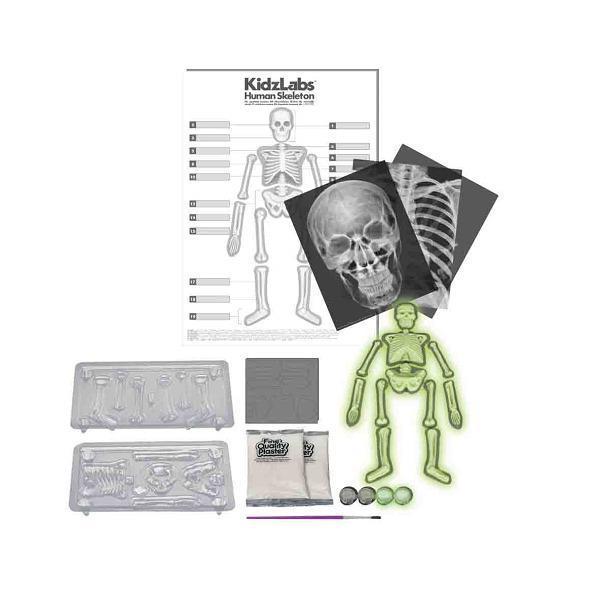 Набор для исследований 4M Светящийся скелет человека (00-03375)