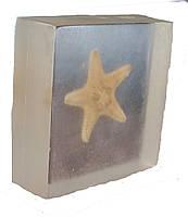 Морська зірка в прозорому пластику