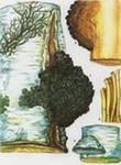 Чага березовая, гриб березовый