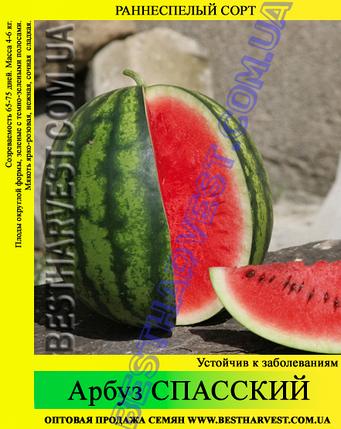 Семена арбуза Спасский 0.5 кг, фото 2