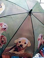 """Детский зонт """"Собачки"""" (К.О.Т.)"""