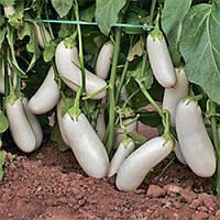 Семена баклажана Аретуза F1 1000 шт.
