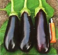 Семена баклажана Фабина F1 20 шт