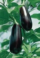 Семена баклажана Шарапова F1 1000 шт.