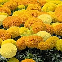 Семена цветов Бархатцы Чикаго Formula Mix 500 с, фото 1